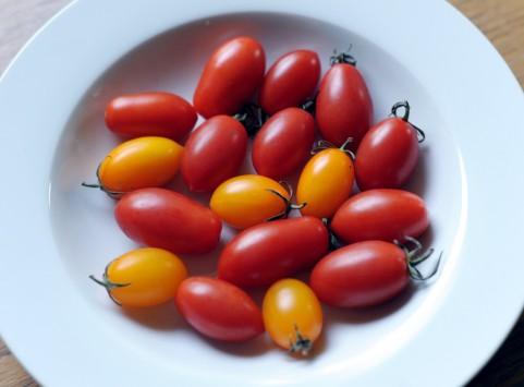 トマト栽培のコツと育て方(1)土作りから植付けまで